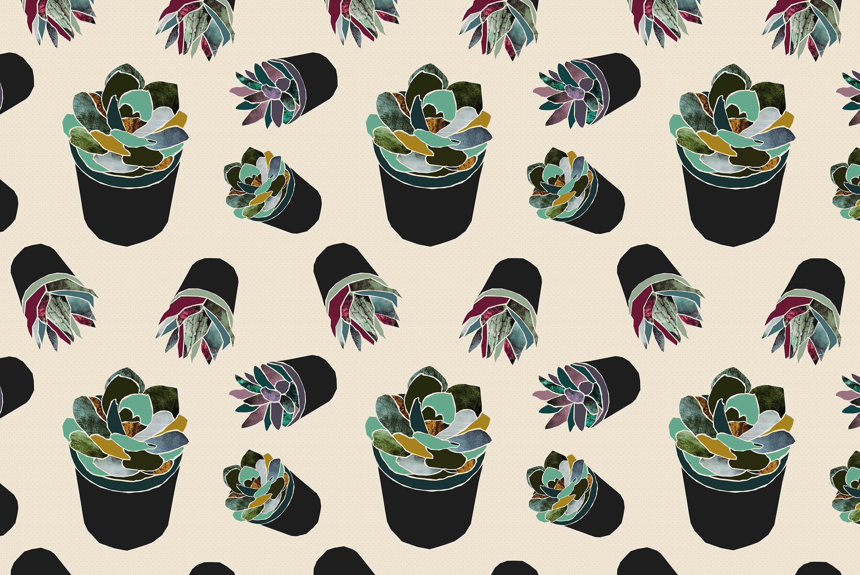 succulent plants pattern lights wallpapers hd desktop and
