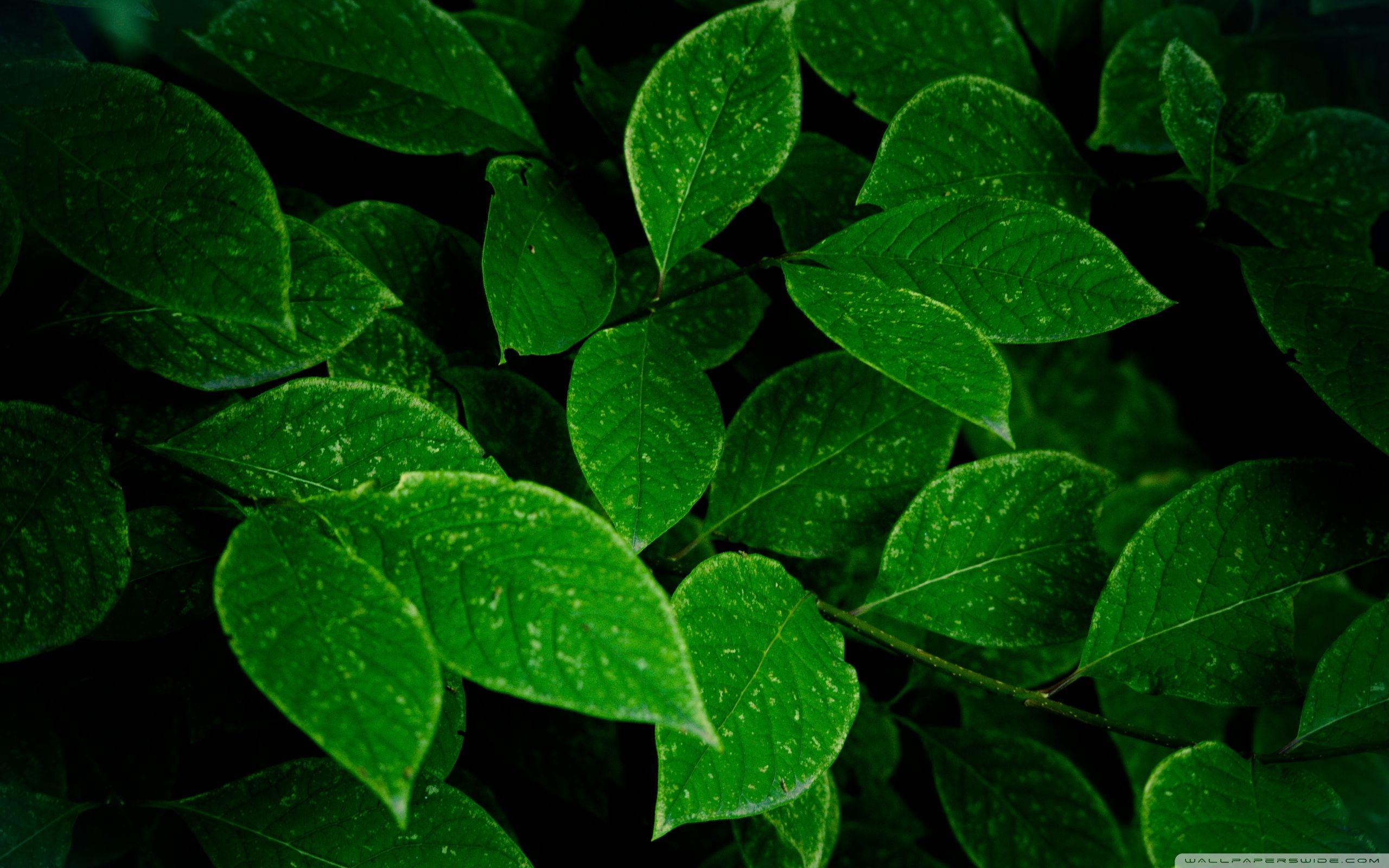 Green Leaf Wallpapers - Wallpaper Cave