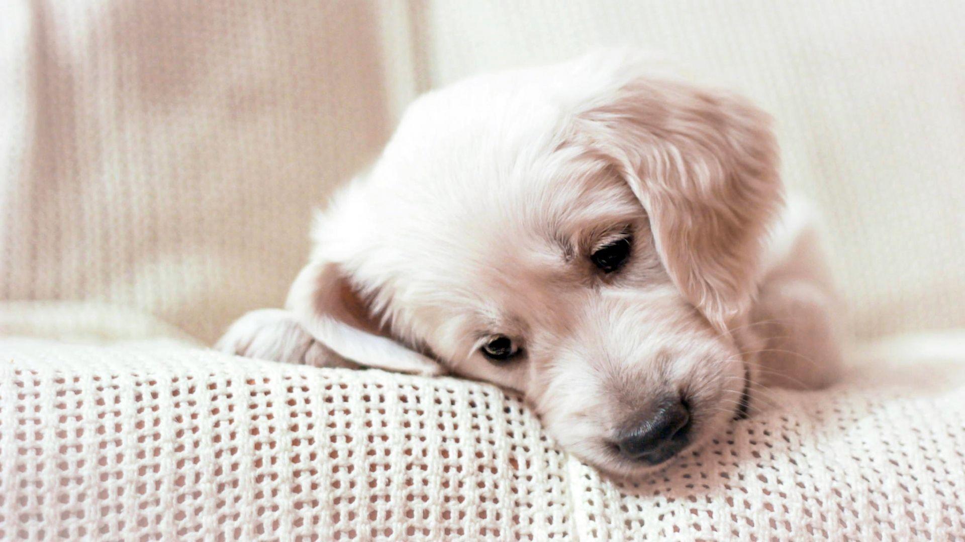 علاج الترجيع عند الكلاب الصغيره