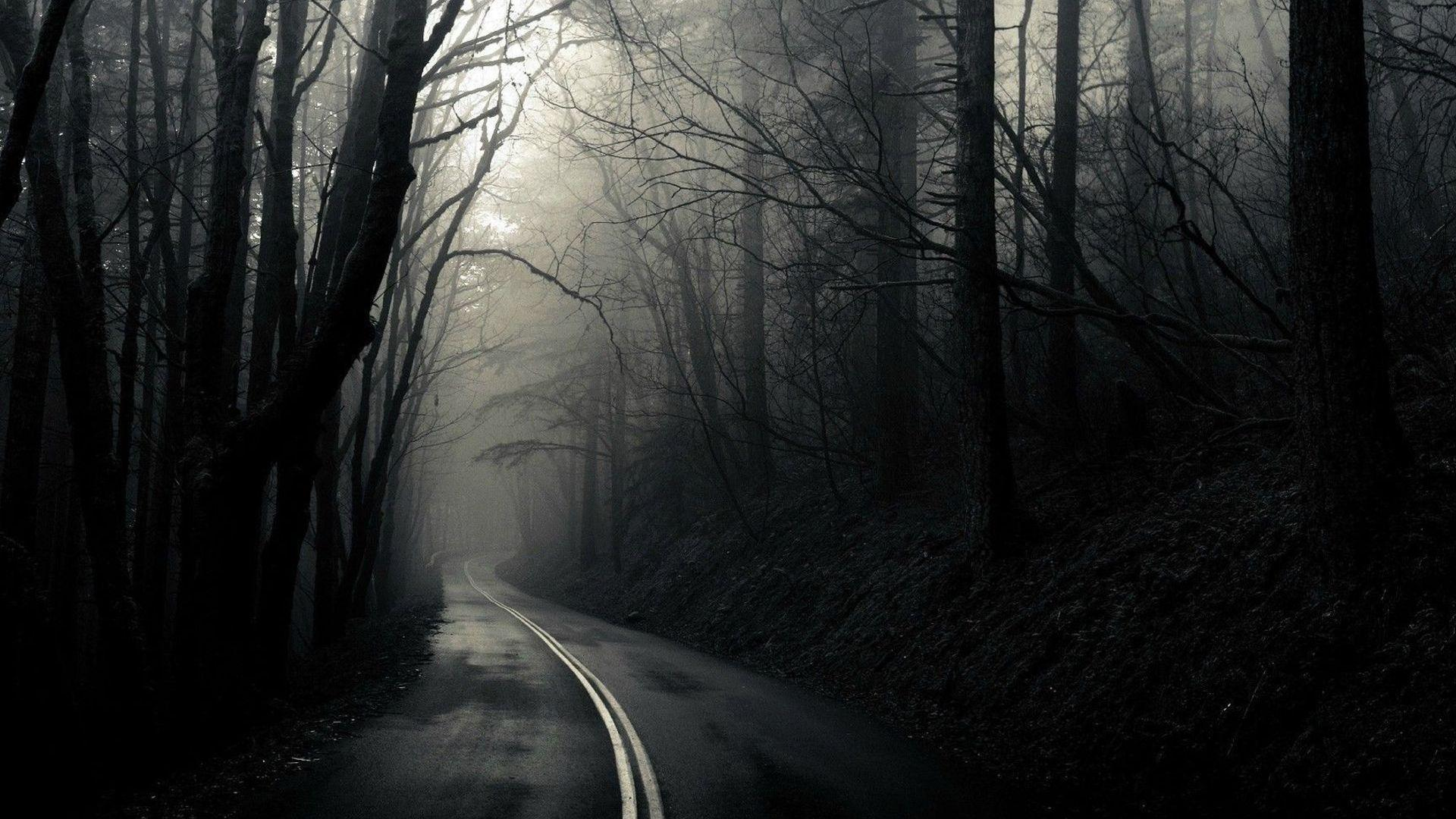 Road Through The Dark Woods Full HD Wallpaper And Background
