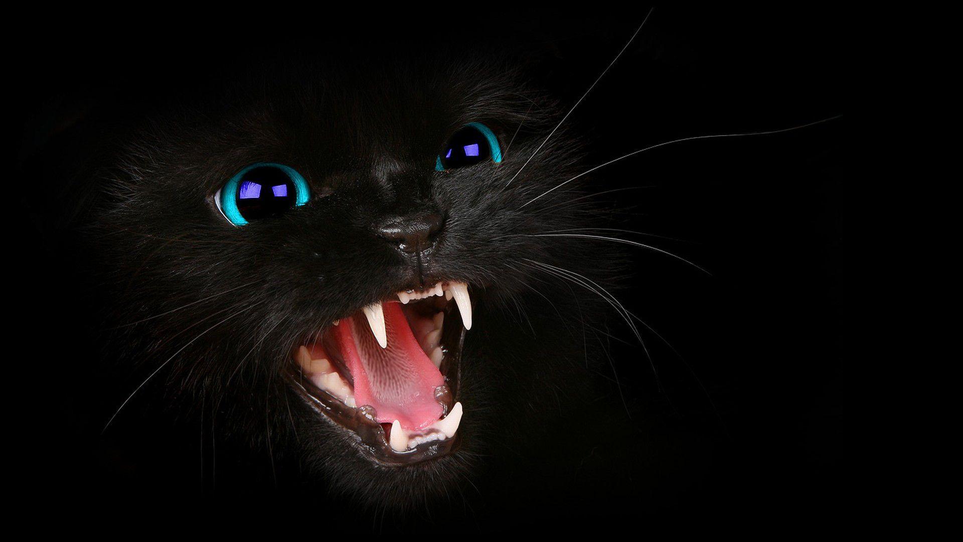 Image result for danger cat wallpaper