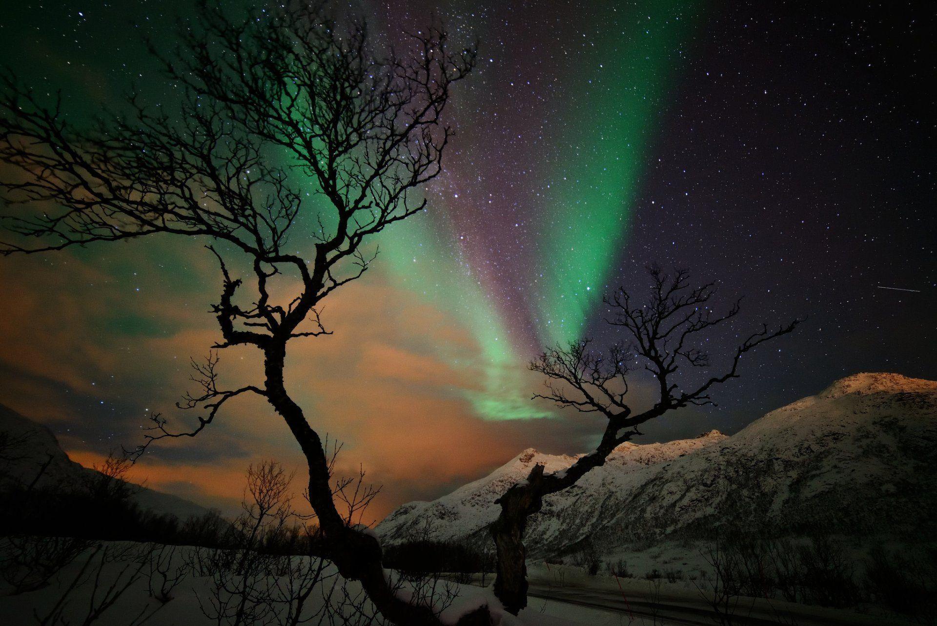 mountain snow winter tree night star northern lights HD wallpapers