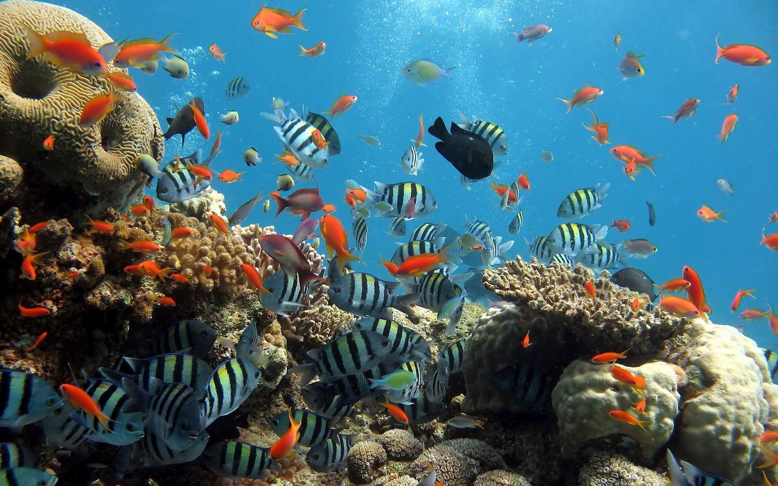 Ocean Animals Wallpapers Wallpaper Cave