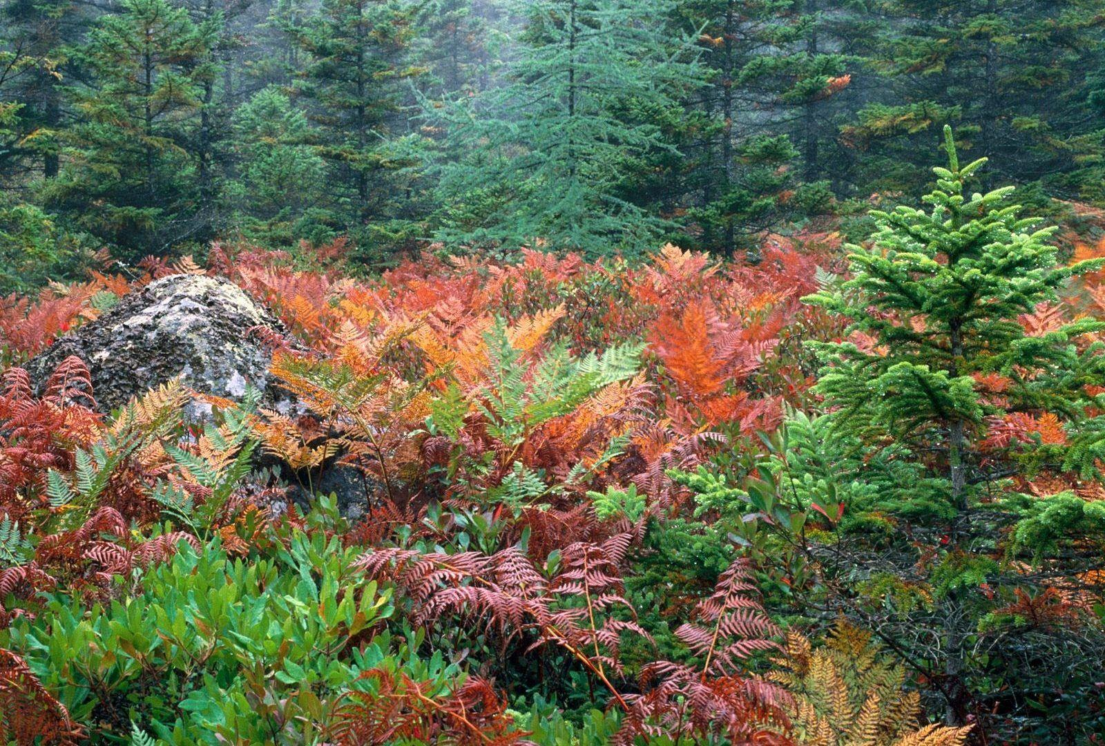 Forests: Acadia Furns National Colorful Autumn Park Wallpapers