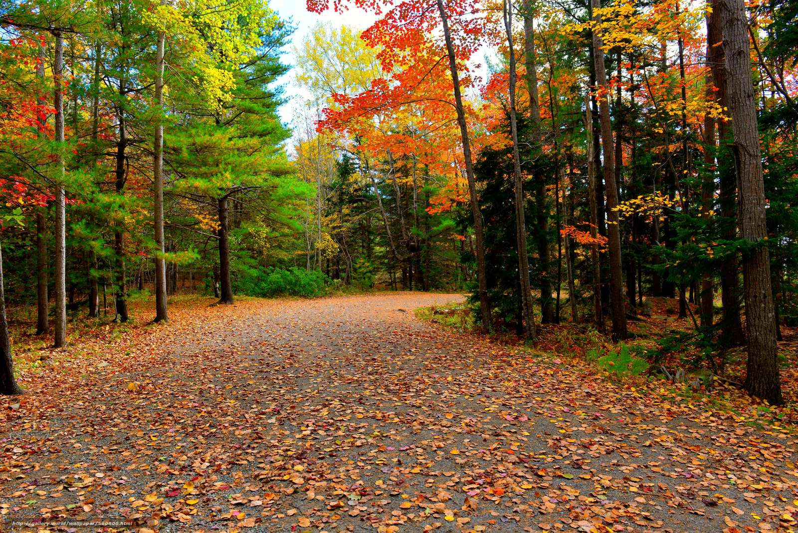Download wallpapers Acadia National Park, autumn, road, trees free