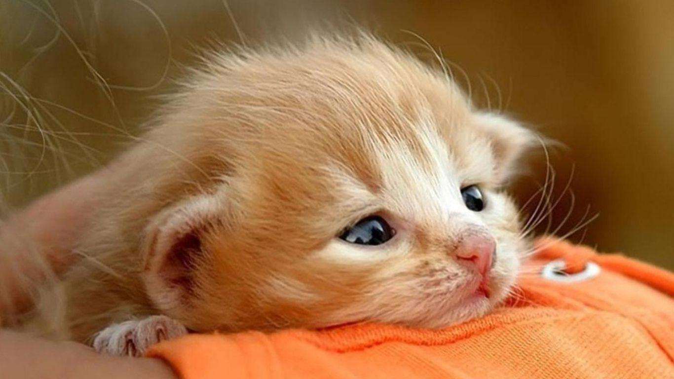 Baby Cat Wallpapers Wallpaper Cave