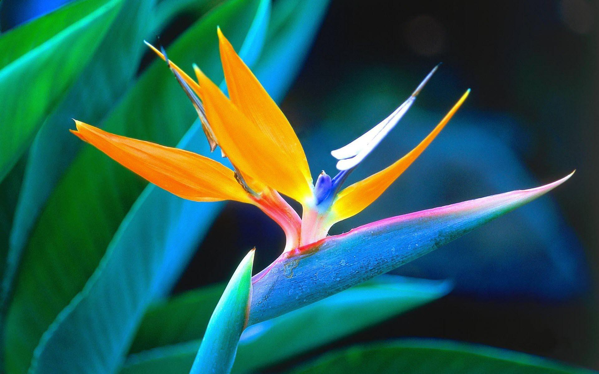 Tropical Flowers Wallpapers Wallpaper Cave