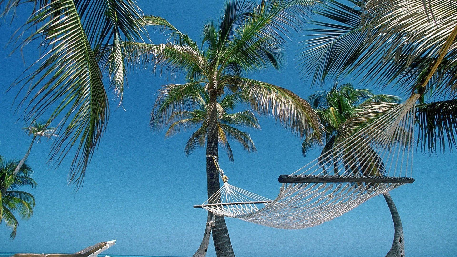 Nature beach hammock palm trees belize wallpapers
