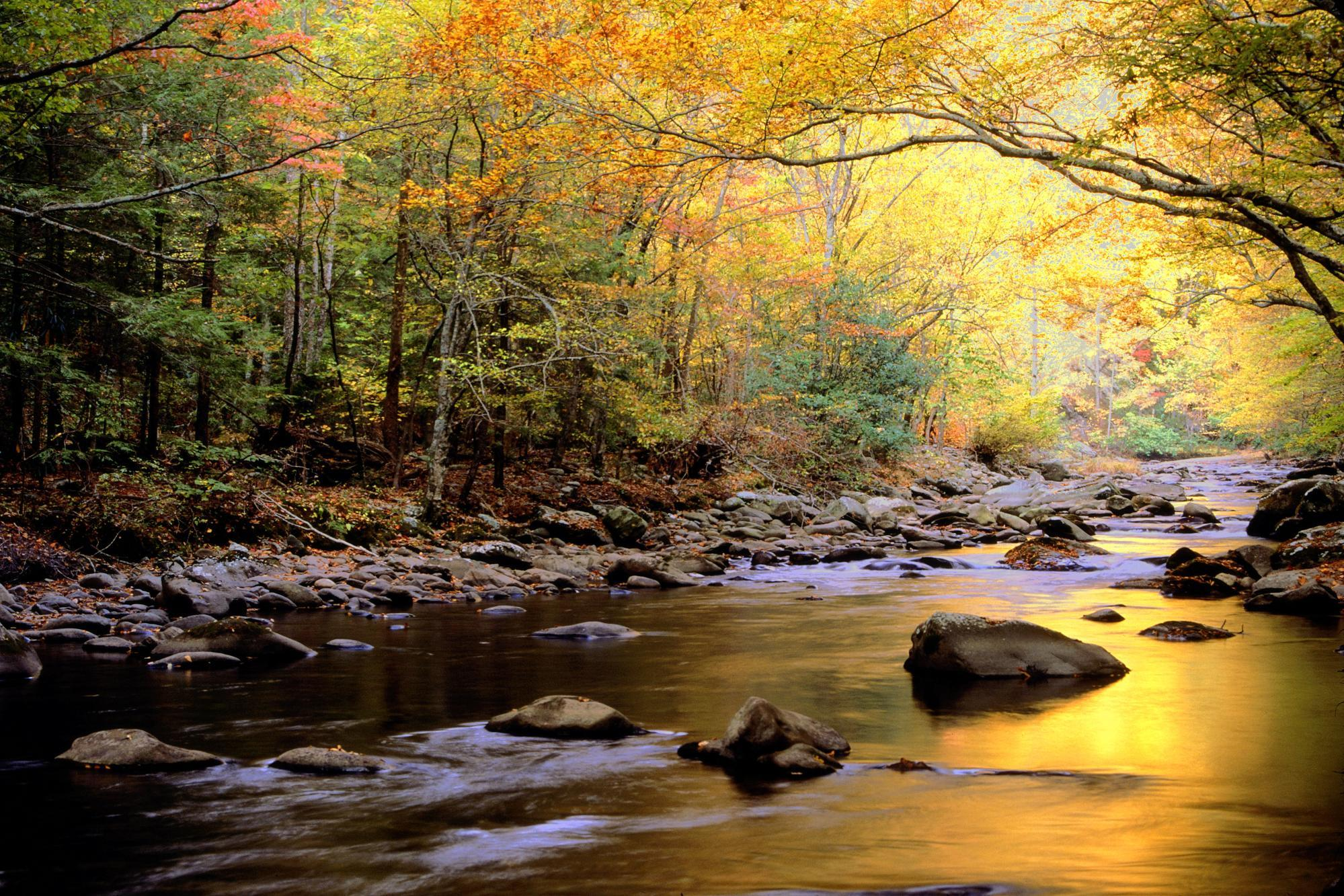 3648x2736px #916991 Great Smoky Mountains National Park (4478.58 ...