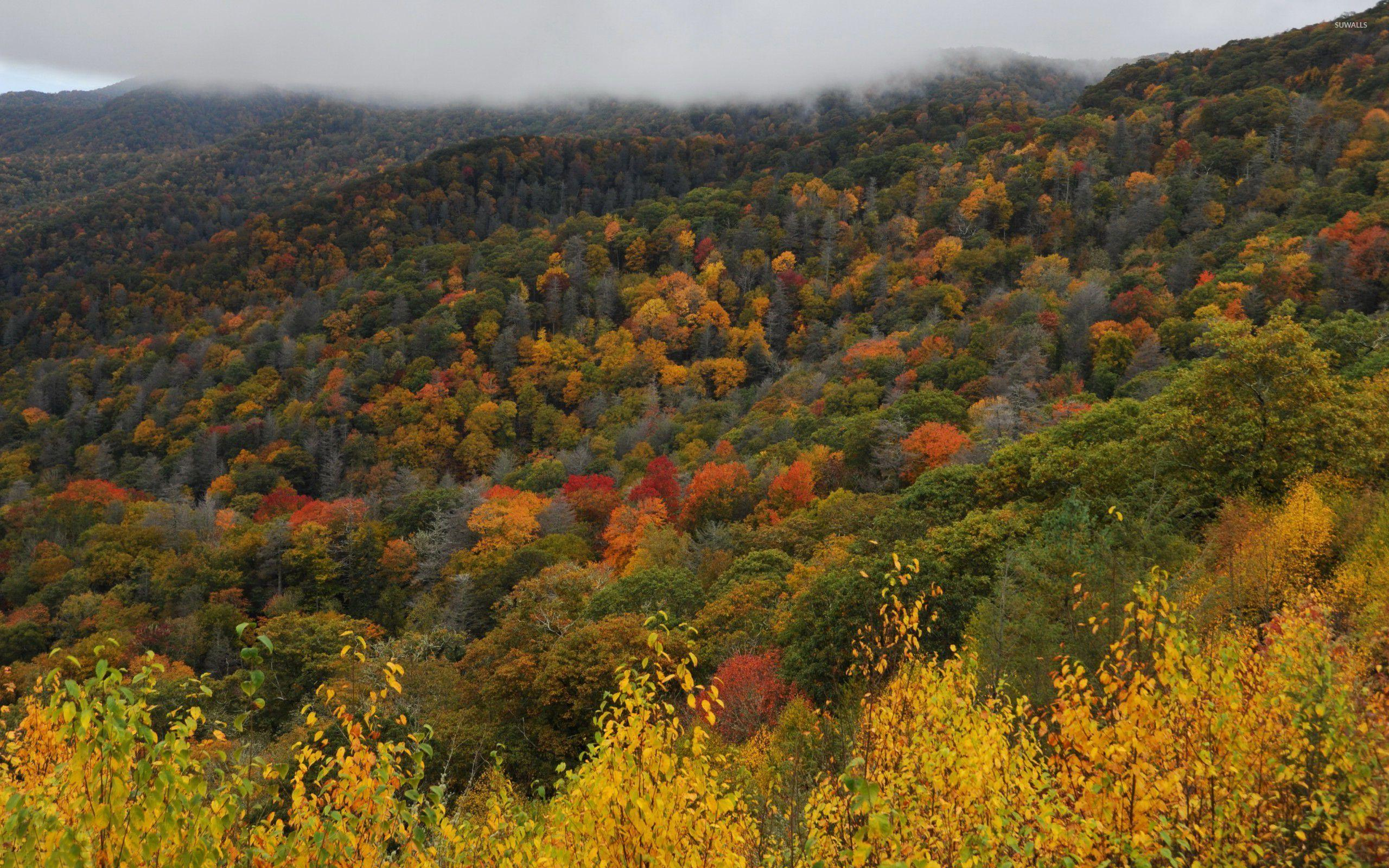 Great Smoky Mountains National Park wallpaper - Nature wallpapers ...