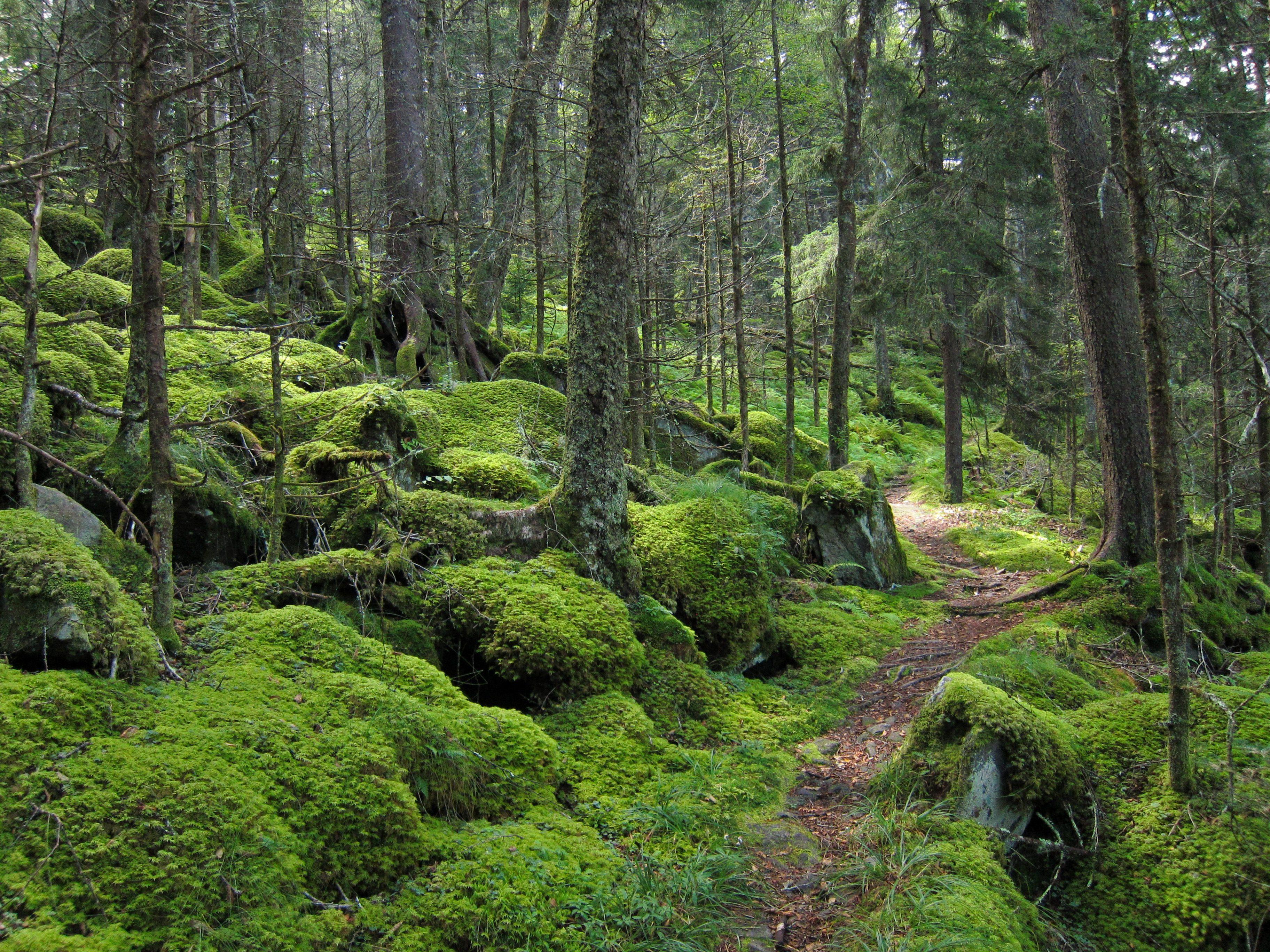 10 Things To Do in The Great Smoky Mountains National Park | ENO ...