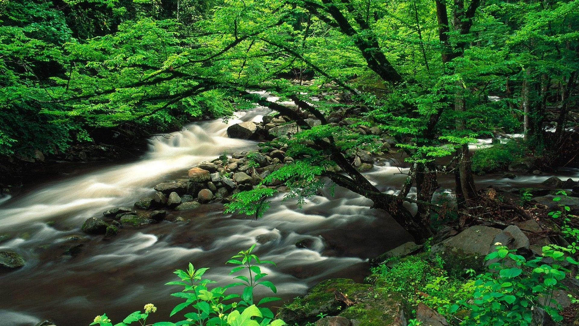 Landscapes Tennessee National Park Great Smoky Mountains wallpaper ...