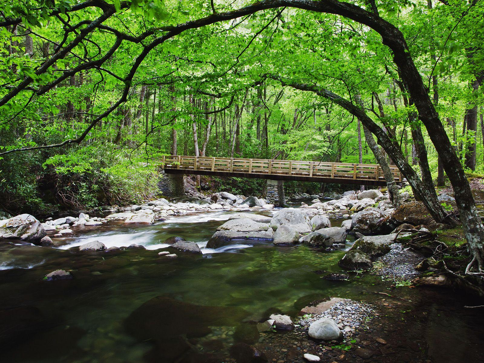 Bridge Over Creek Along Greenbrier, Great Smoky Mountains National ...