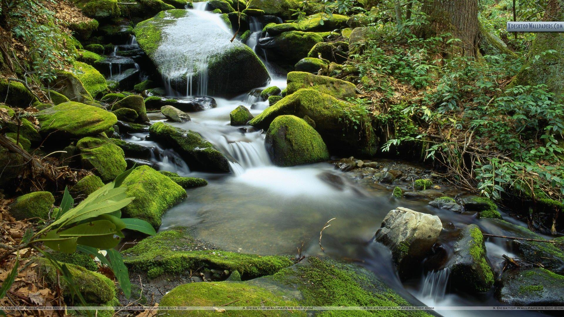 Cascade at Roaring Fork in April, Great Smoky Mountains National ...