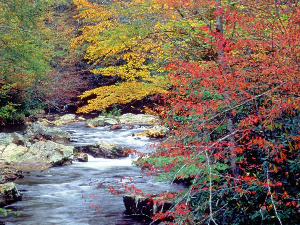 Great Smoky Mountains National Park has regrown | Chicago Sun-Times