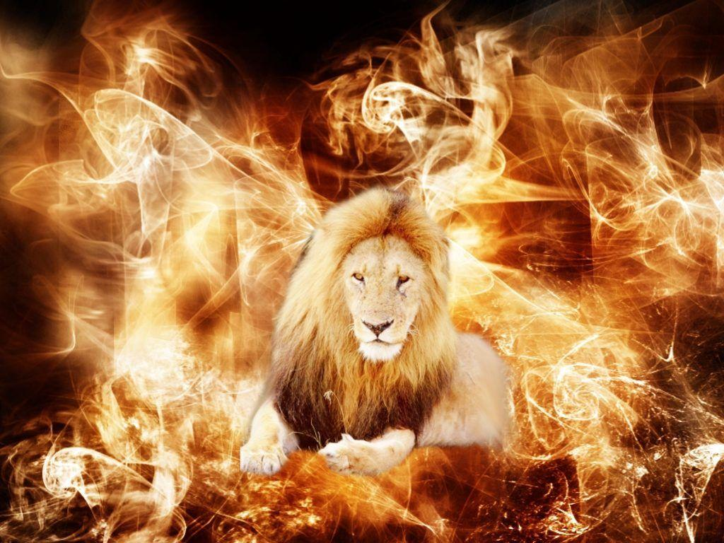 Animal Wallpaper Lion Wallpaper Black And White Wallpapers High .