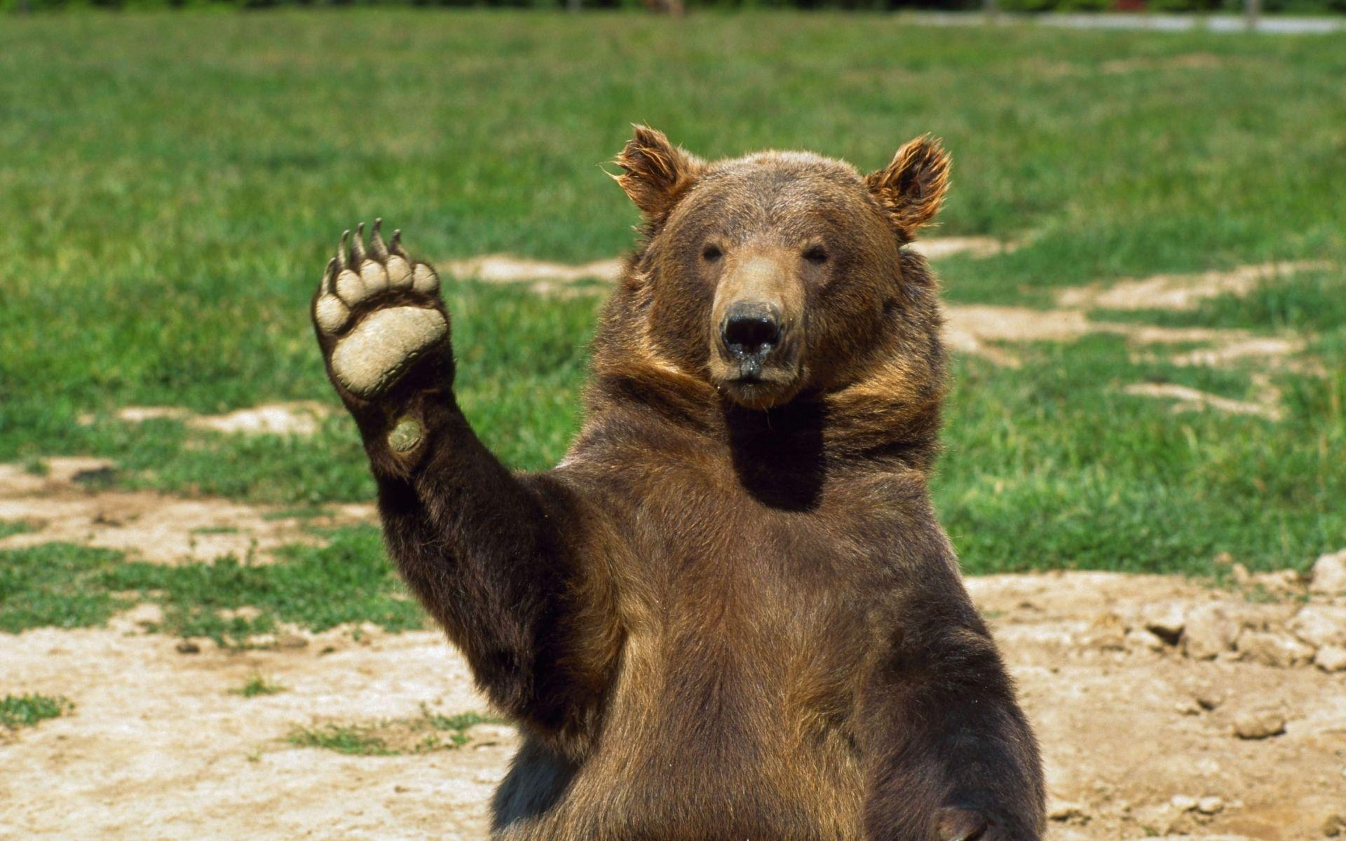 Funny grizzly bear pictures