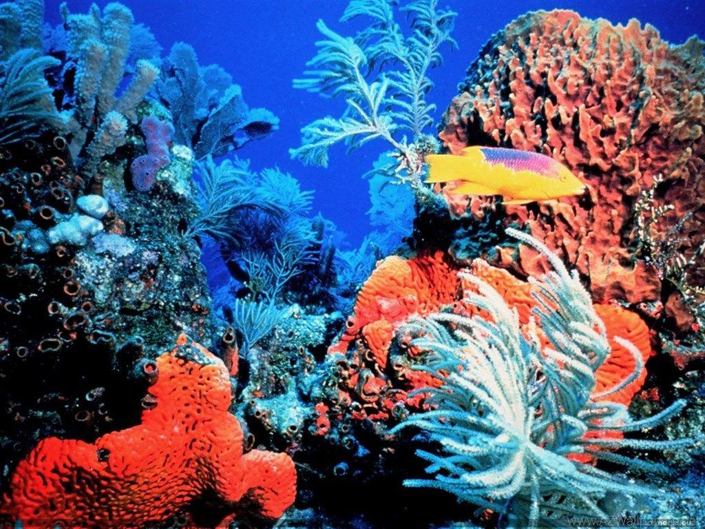 Coral Reef Florida Keys Ocean Life 11280x960 Deluxe Wallpapers