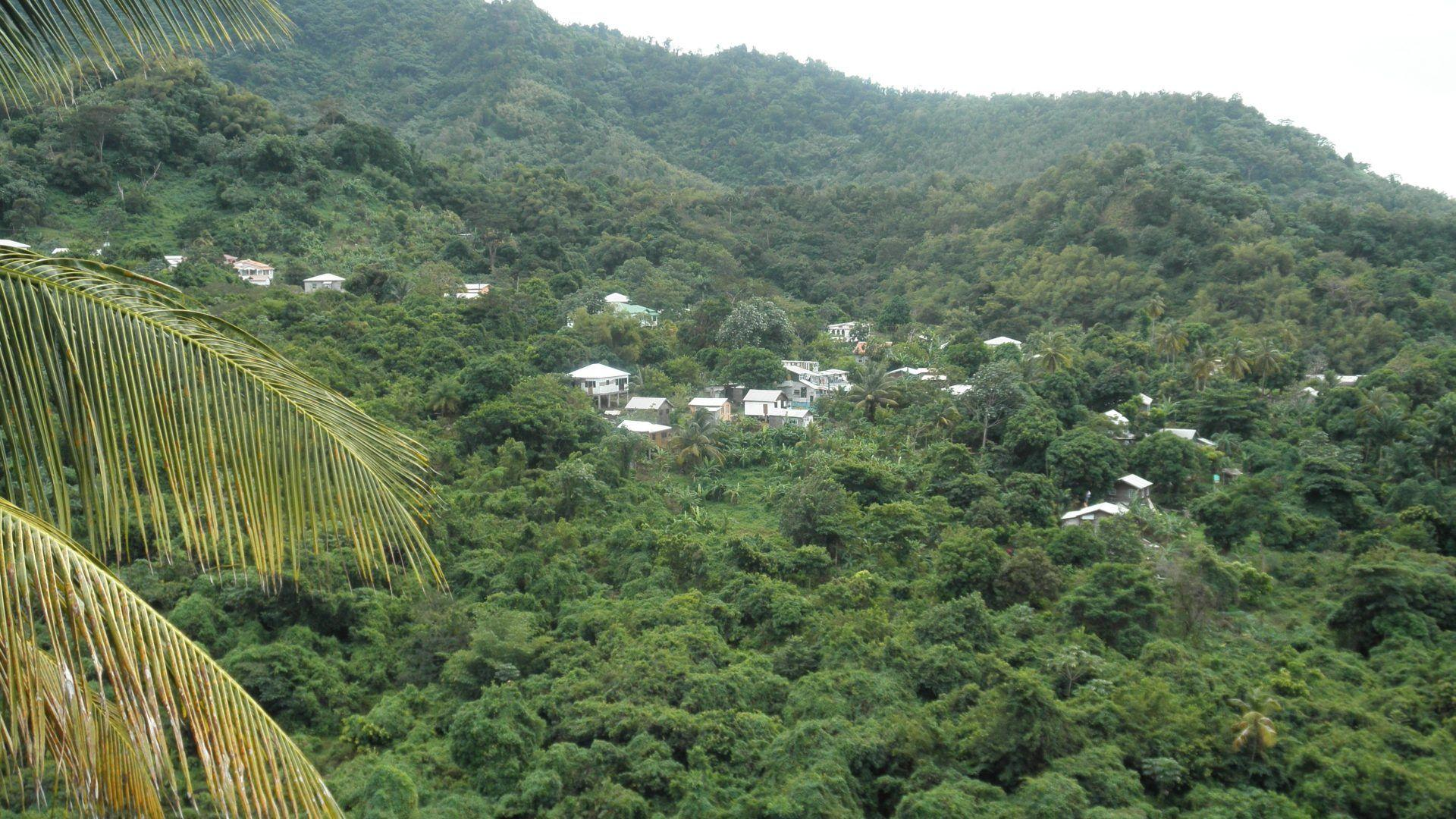 Forest: St Lucia Village Photography Forests Green Trees Vacation ...