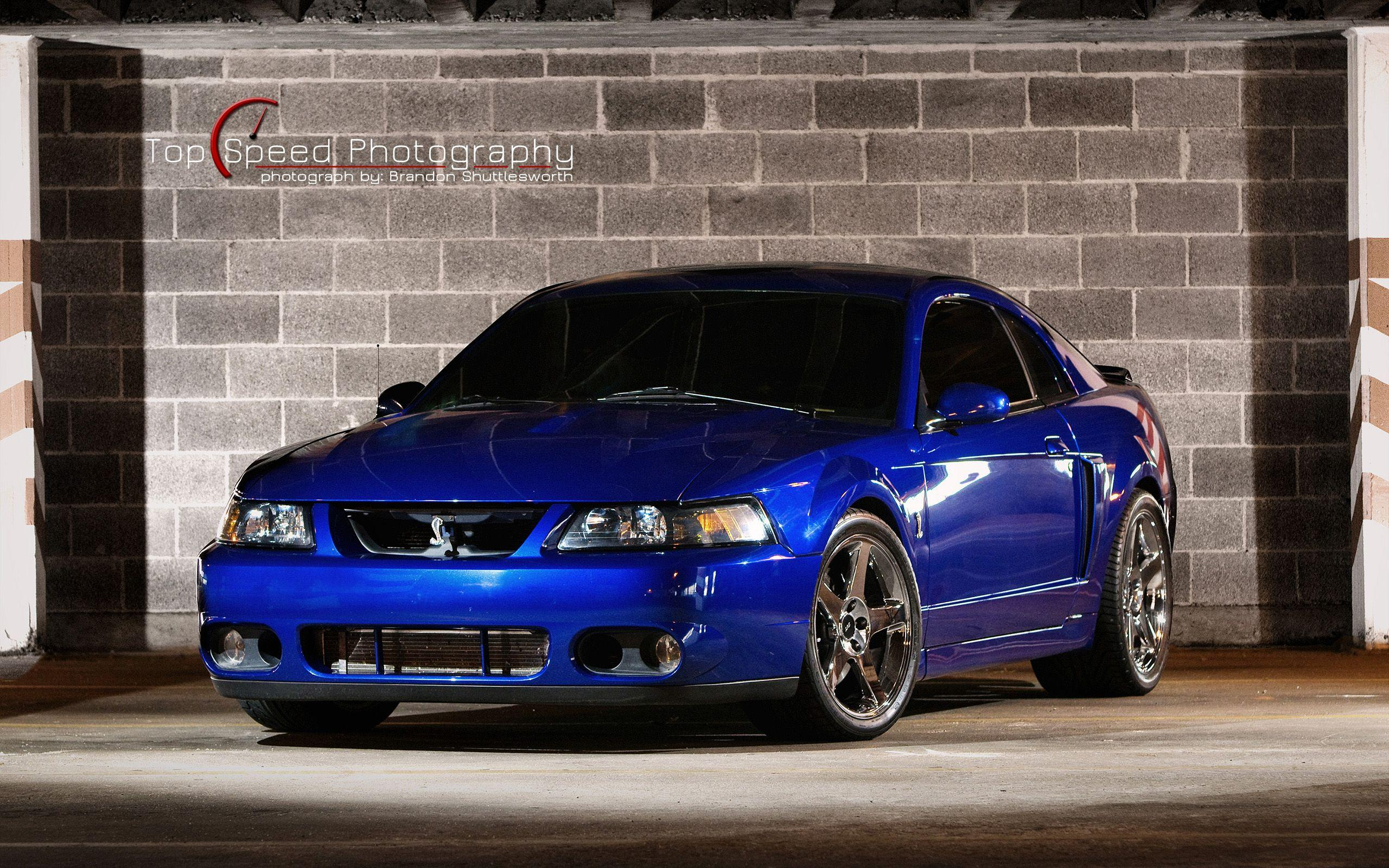 91 Mustang Gt >> 2003 Ford Mustang Cobra Terminator Wallpapers - Wallpaper Cave