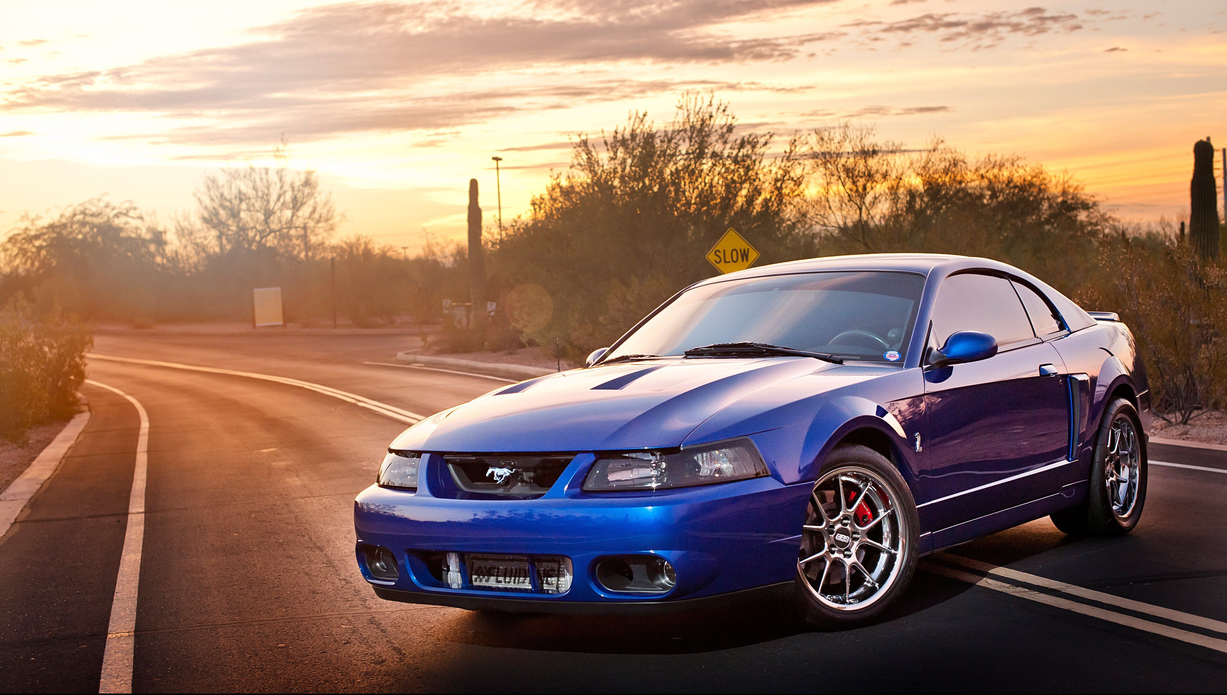 Terminator Mustangs