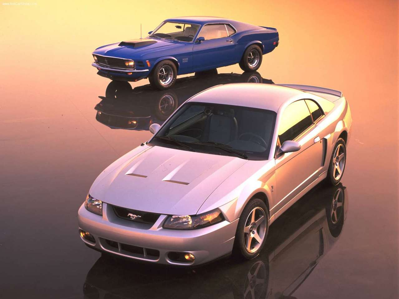 2003 ford mustang cobra terminator wallpapers wallpaper cave. Black Bedroom Furniture Sets. Home Design Ideas