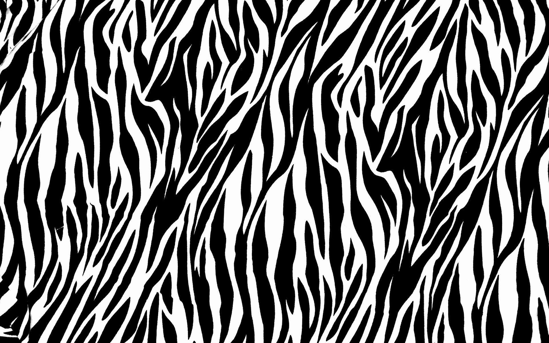 Zebra Computer Wallpapers