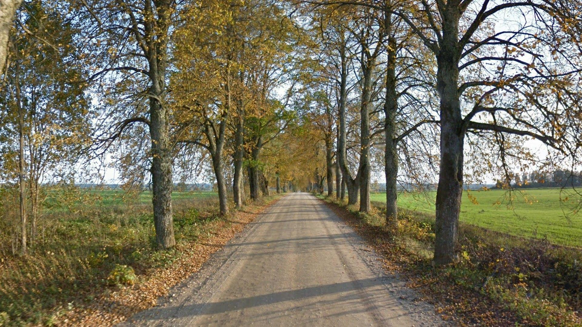 Miscellaneous: Tree Grass Field Forest Green Road Trees Autumn