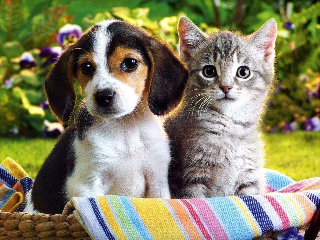Kittens And Puppies Wallpapers