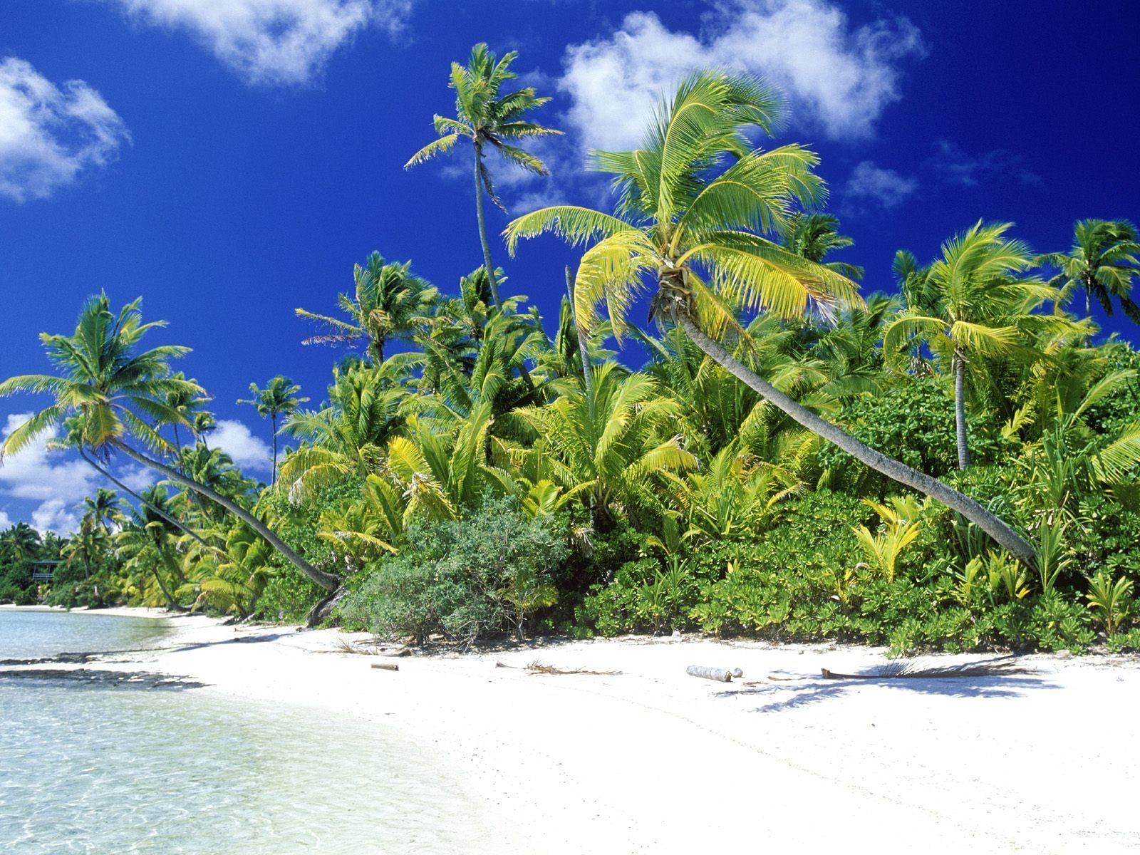 Palm Beach Solomon Islands Wallpapers