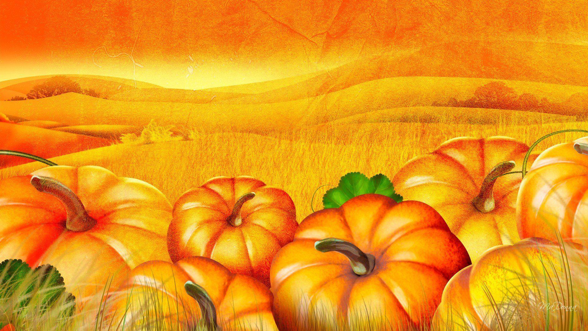 Pumpkin Patch Wallpapers - Wallpaper Cave