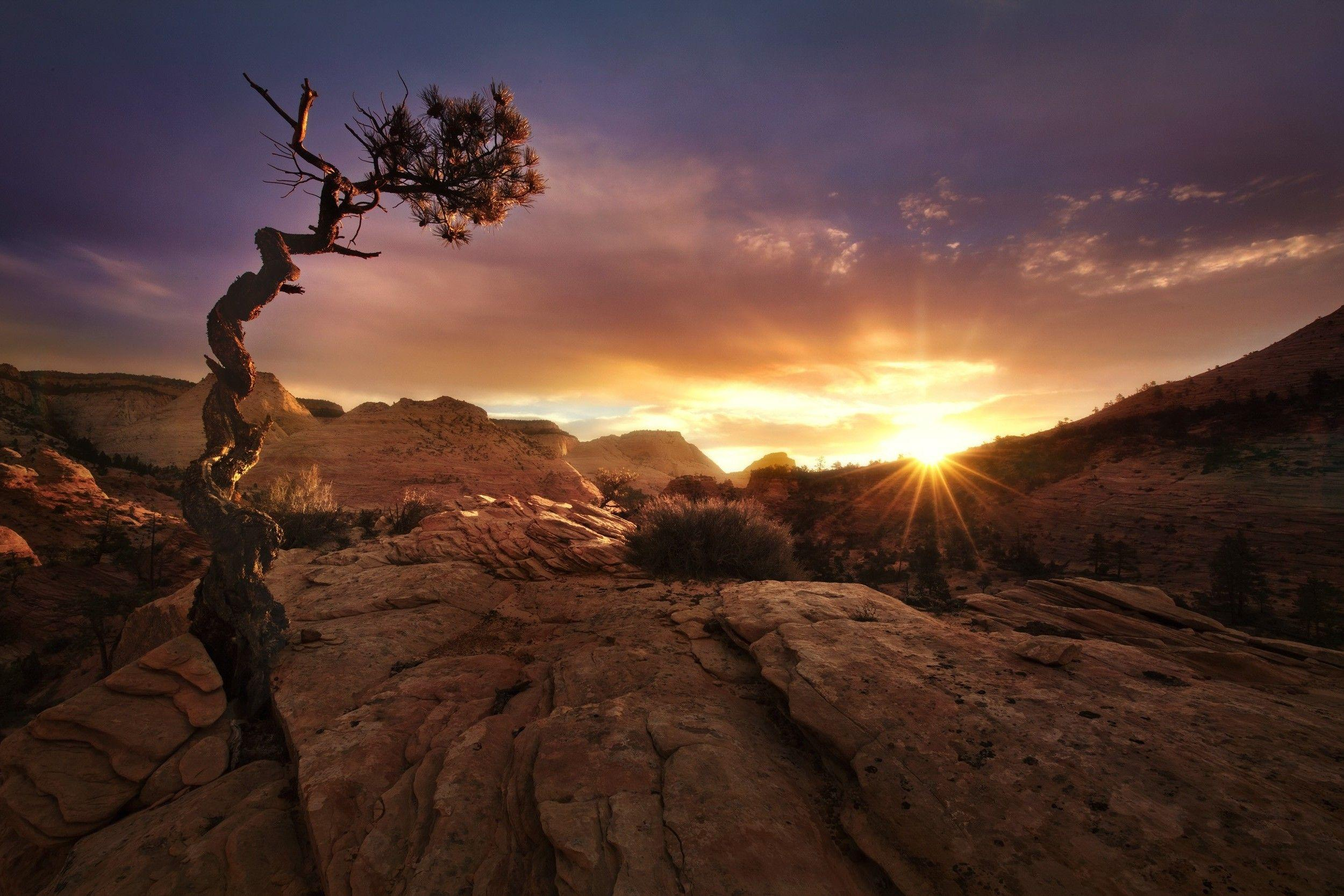 nature, Landscape, Fall, Sunset, Desert, Trees, Zion National Park ...