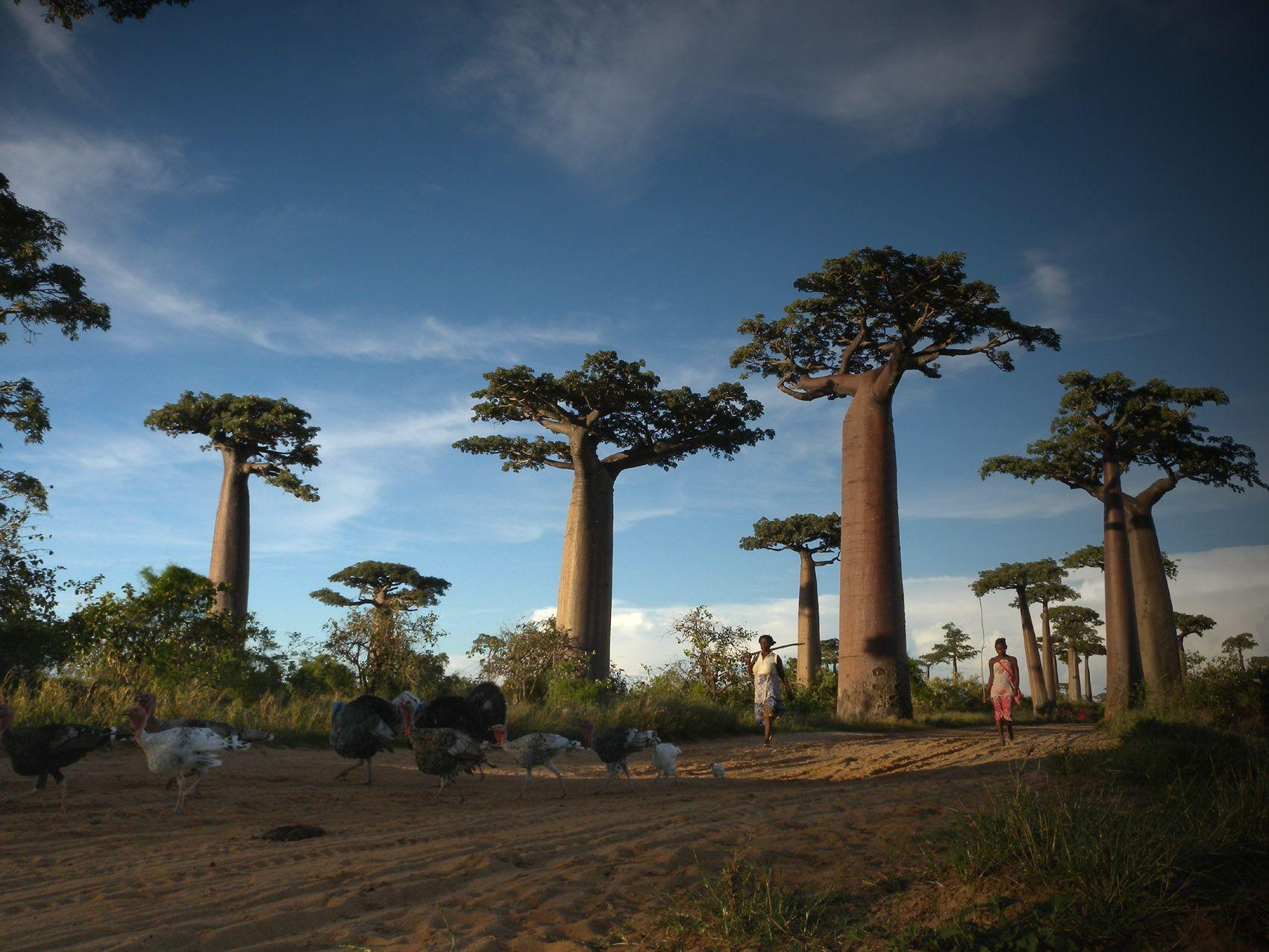 Madagascar Country Wallpapers Wallpaper Cave