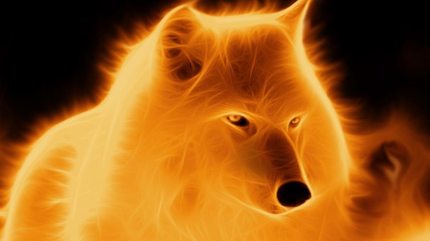 Fire Wolf Wallpapers Wallpaper Cave