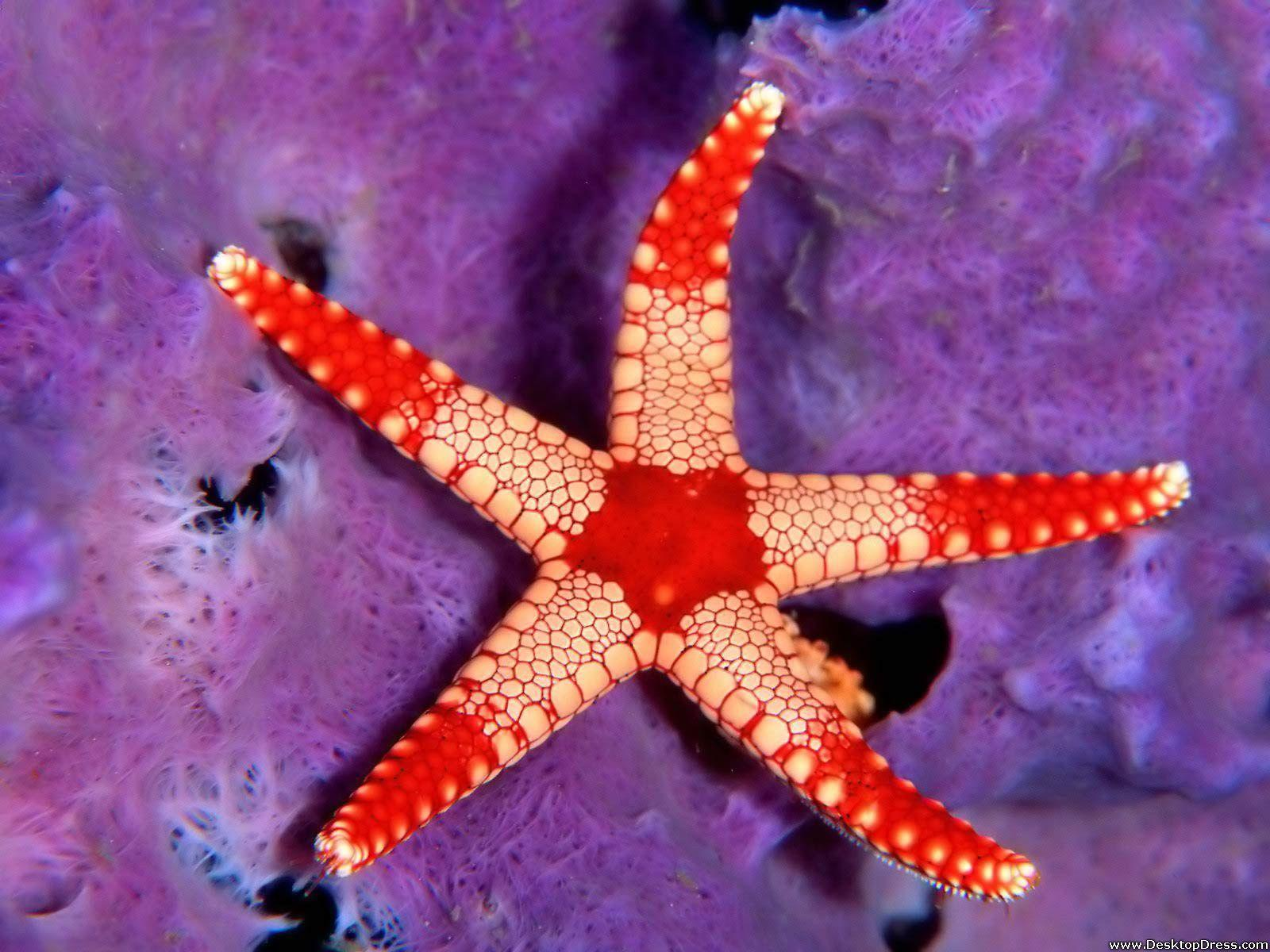 Desktop Wallpapers » Animals Backgrounds » Sea Star Palau ...