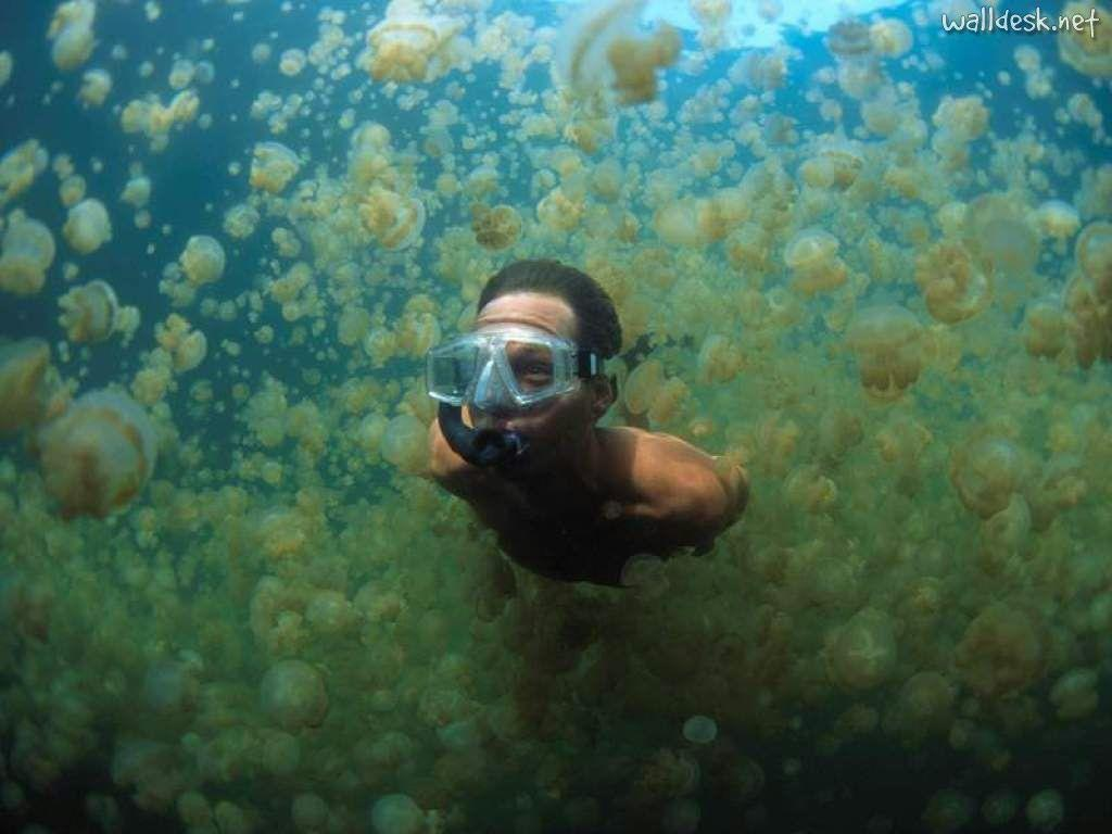 swimming through jellyfish in palau, micronesia | beautiful places ...