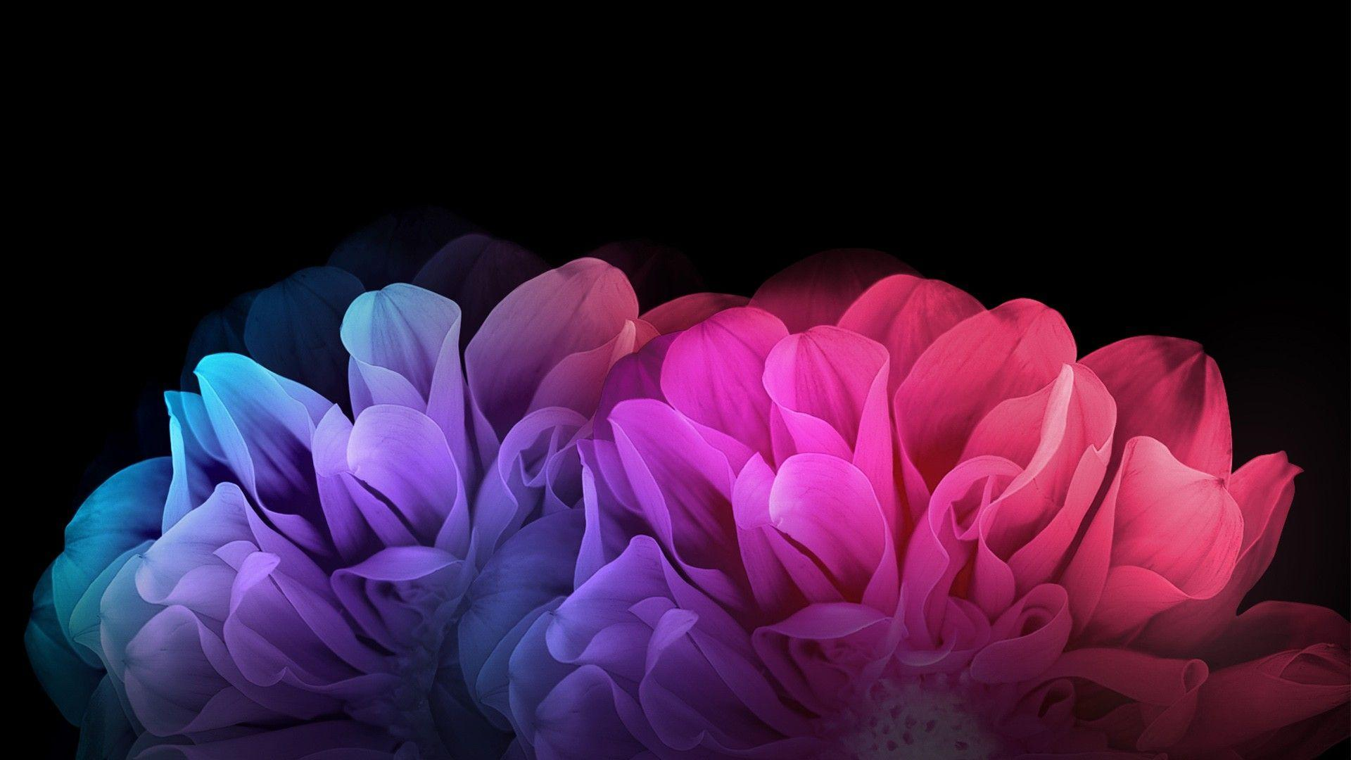 Colorful Flowers Dark Background Wallpapers | HD Wallpapers