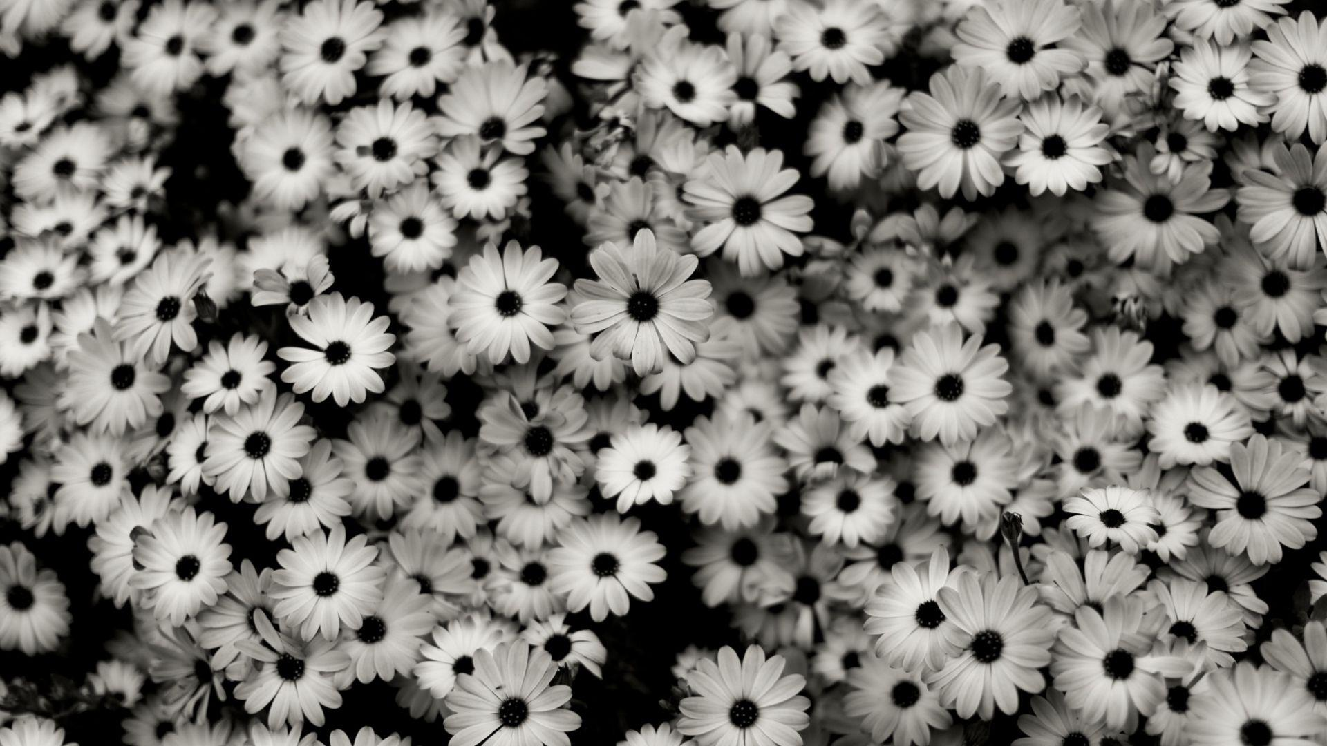Black Flowers Wallpapers Wallpaper Cave