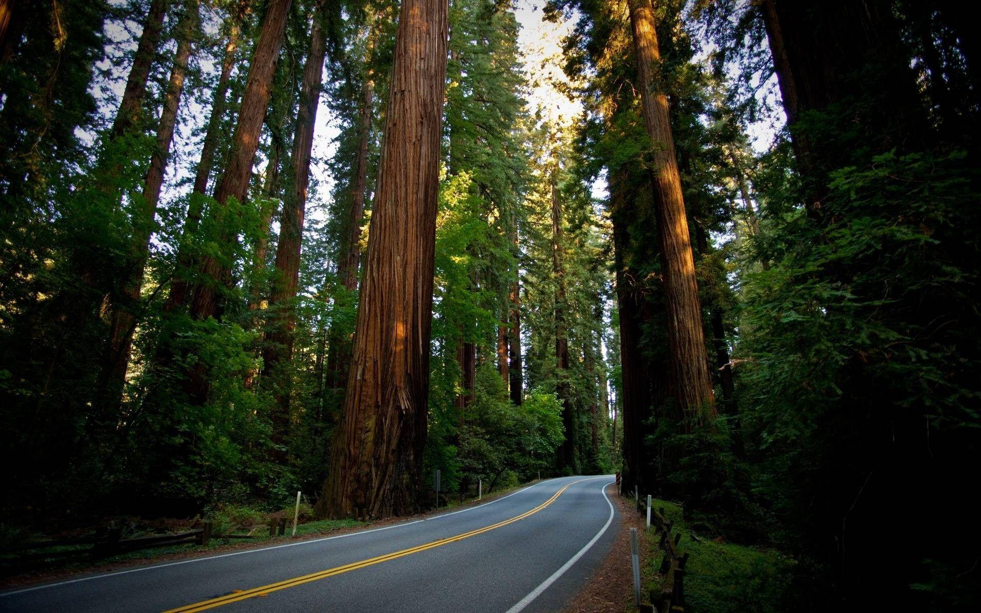 Redwood National Park Desktop Wallpapers, Redwood National Park