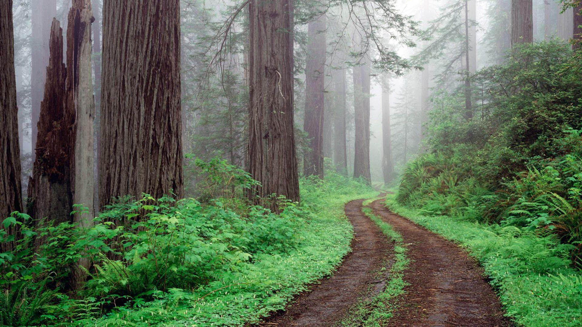 redwoods national park california