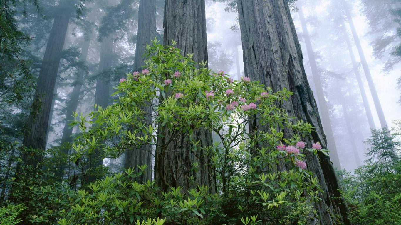 Redwood National and State Parks widescreen wallpapers