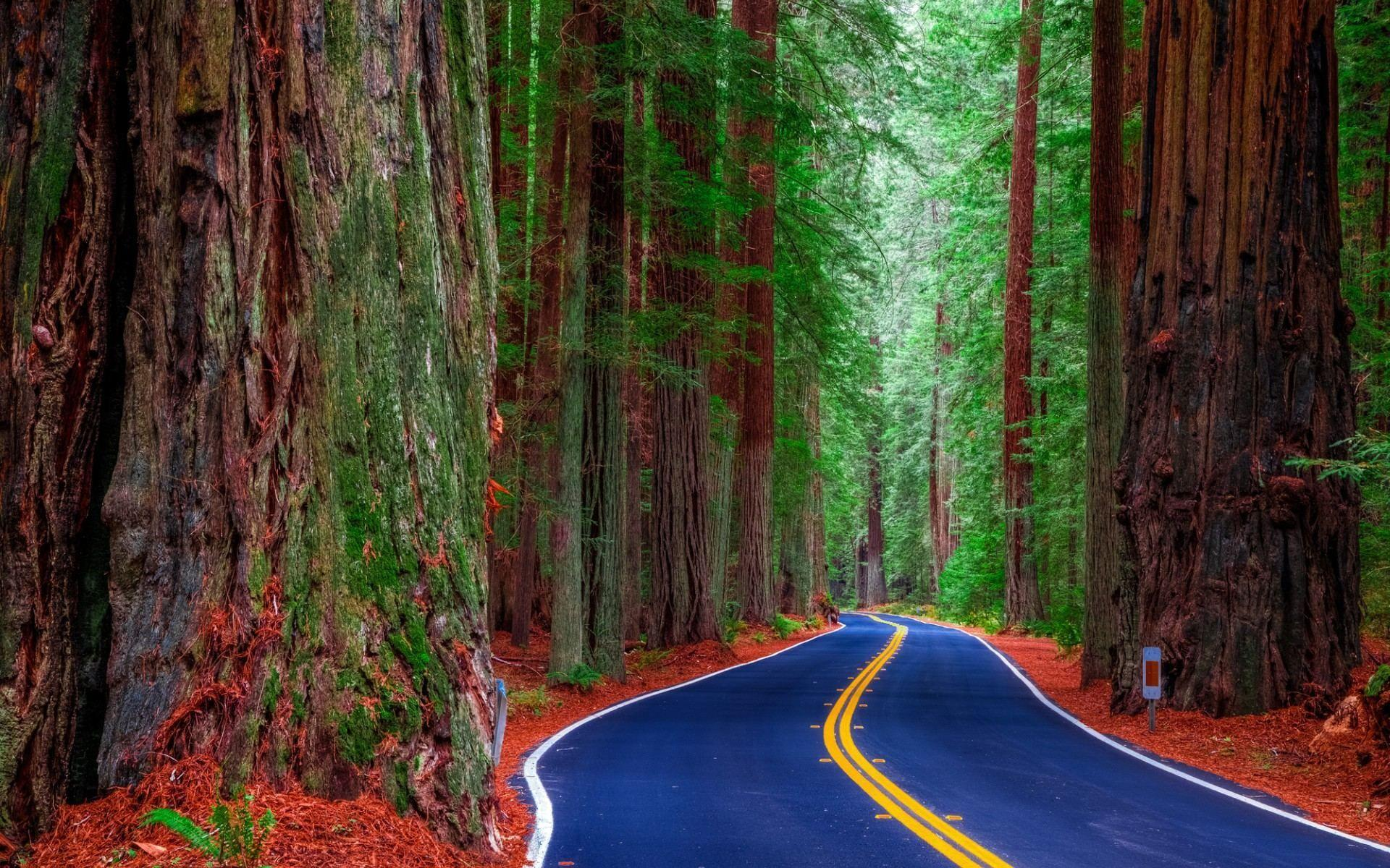 Redwood Forest Road Wallpapers HD Download For Desktop