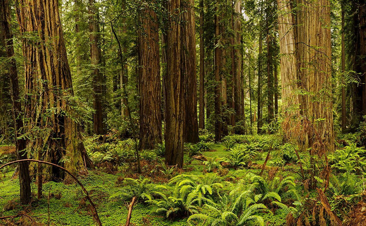 Image California USA Redwood National And State Parks Nature