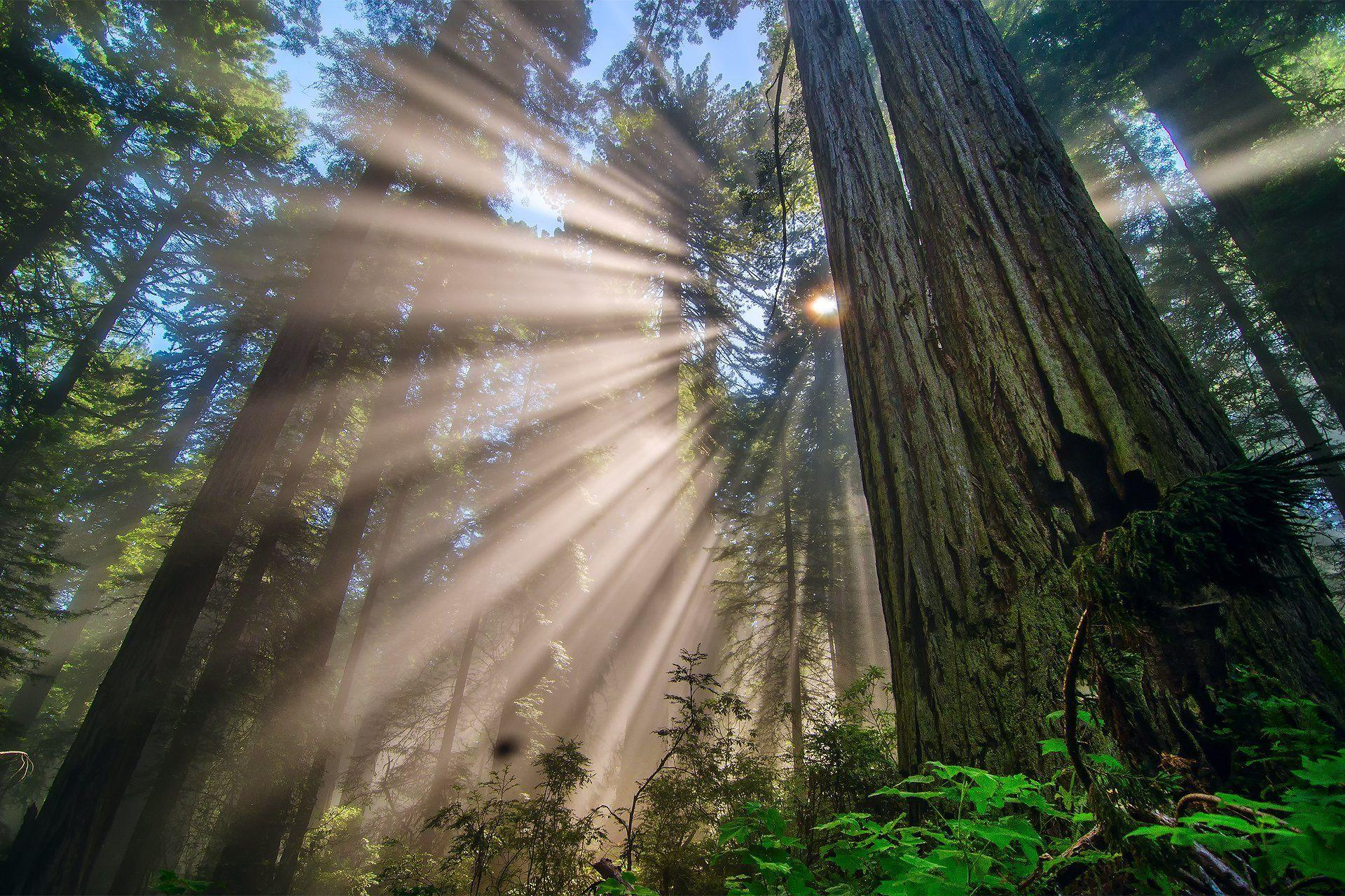 Redwood National Park Wallpapers