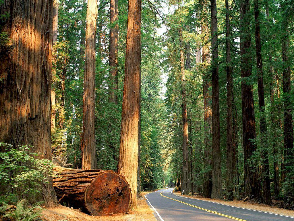 California's Redwood Forest. Growing up we would vacation in
