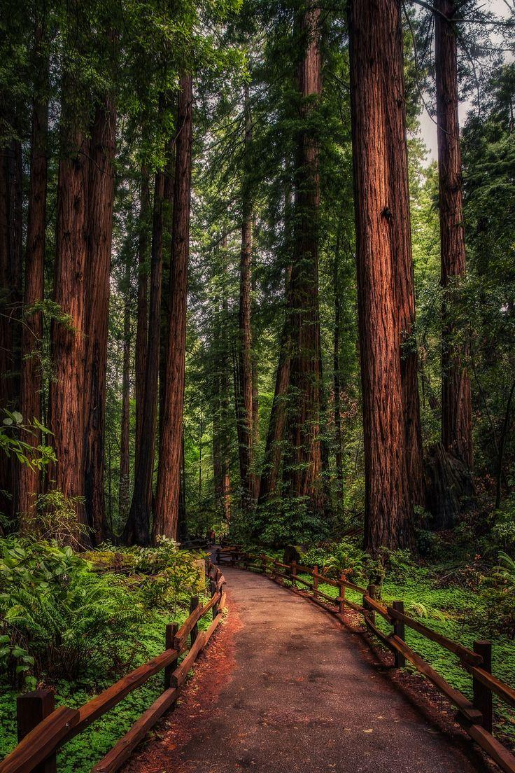 124 best California Redwoods image