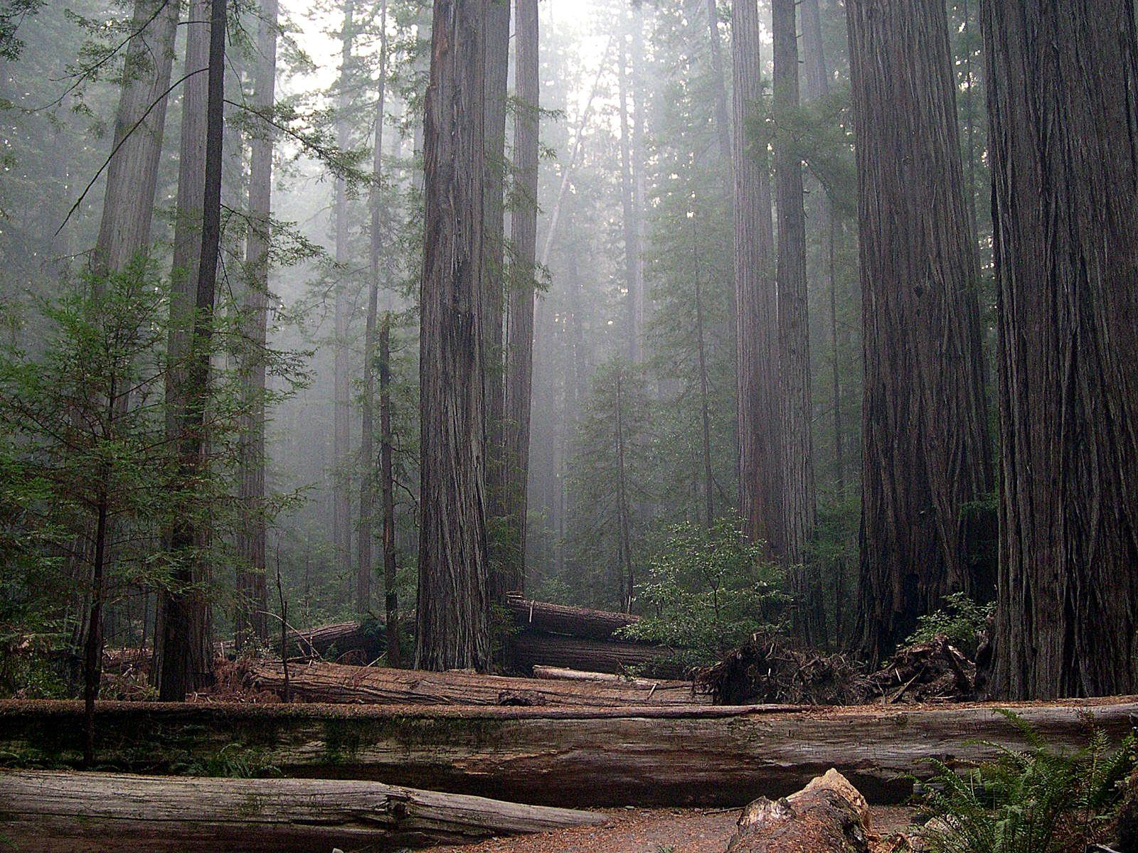Redwood National Park!
