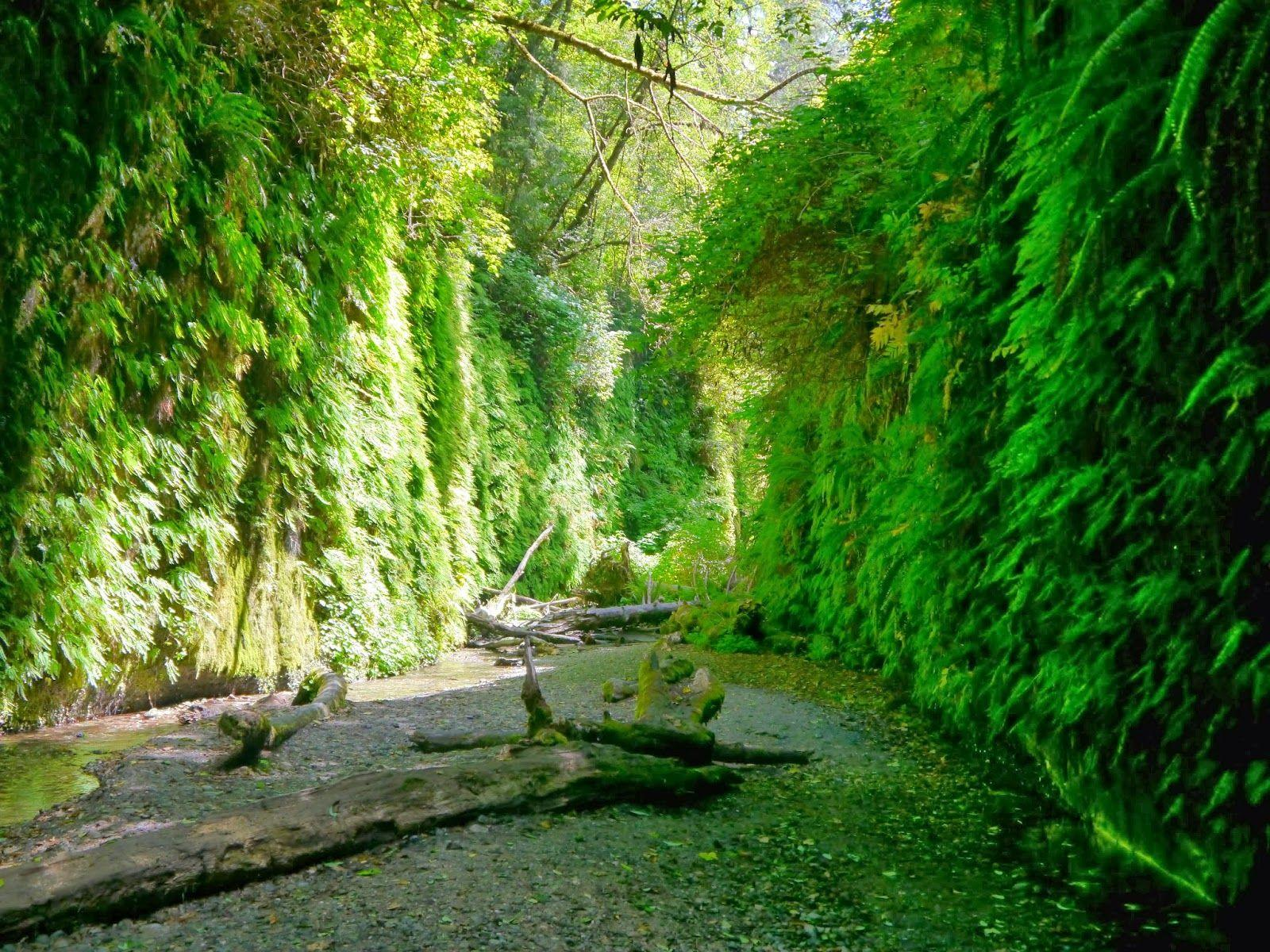 American Travel Journal: Fern Canyon Trail
