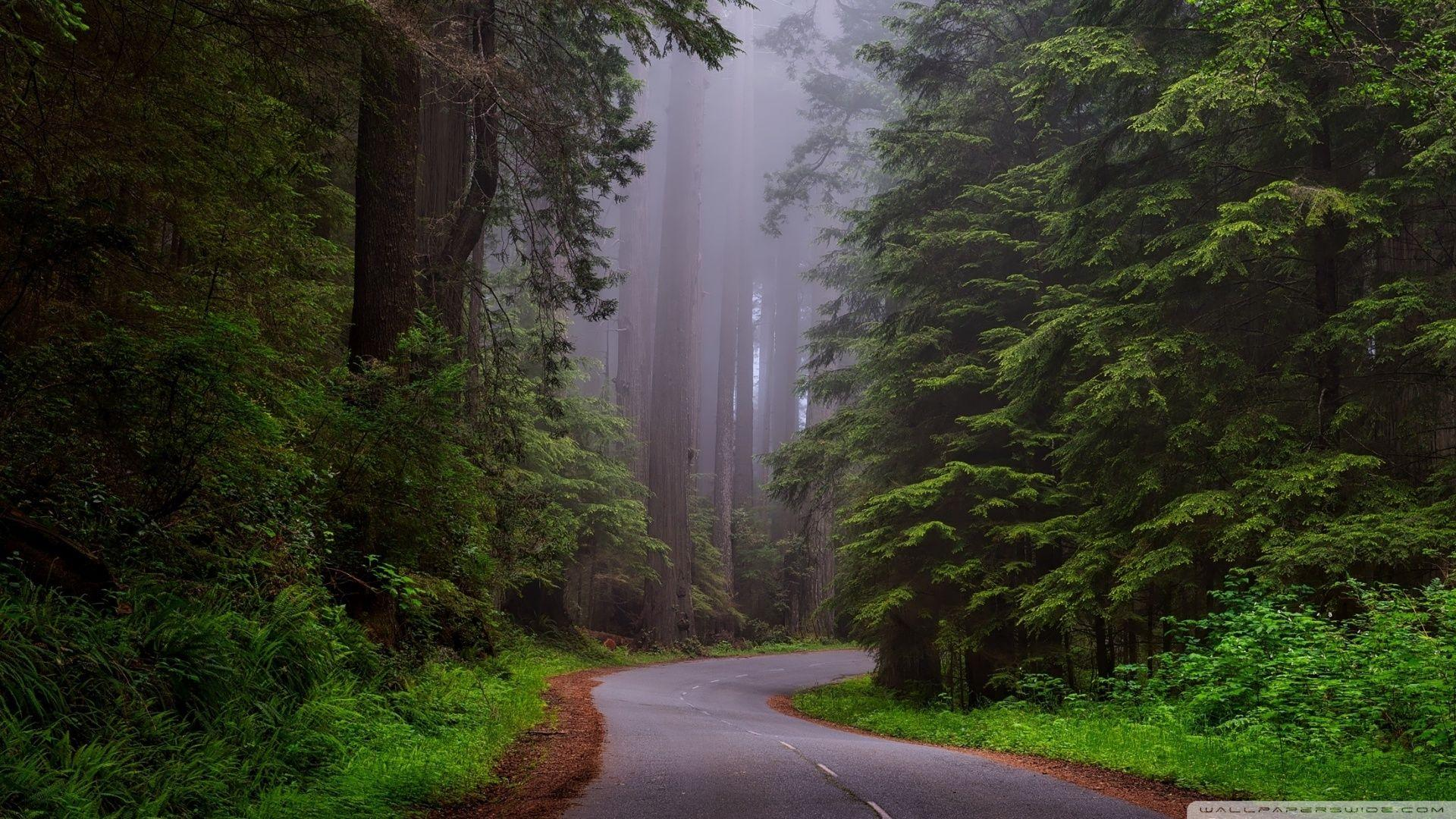 Redwood National Park, California HD desktop wallpapers