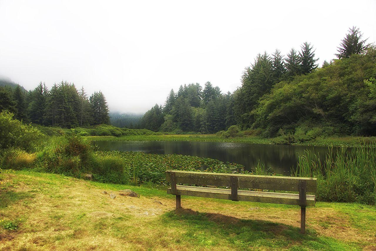 USA Redwood National and State Parks Nature Lake Grass Bench